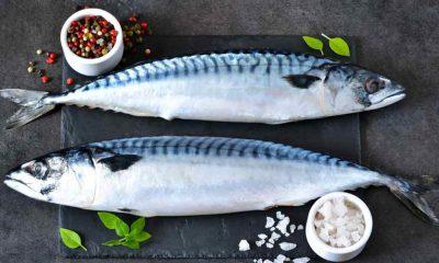 Loại cá biển nào tốt nhất cho sức khỏe?