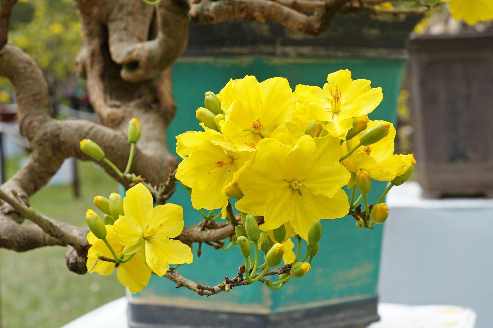 Năm 2021, chọn hoa Tết Tân Sửu theo phong thuỷ phúc lộc đầy nhà