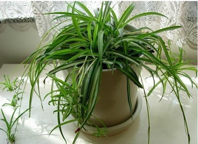 cây trồng trong nhà, cây cảnh trang trí, cây phong thủy, cây phong thủy tốt