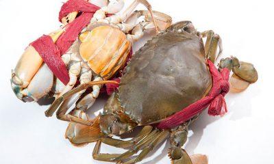 Bật mí 4 tuyệt chiêu chọn cua biển ngon, chắc thịt