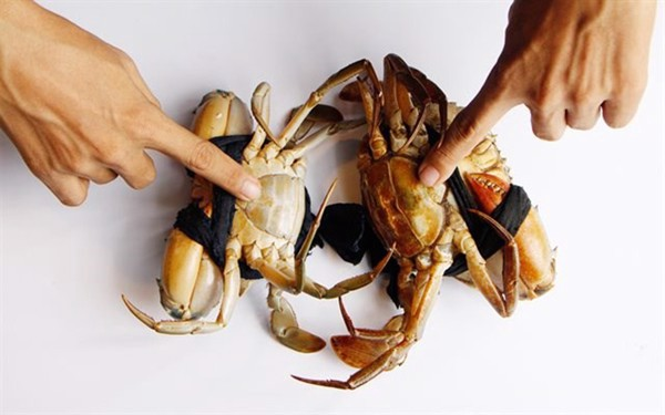 cách chọn cua biển ngon chắc thịt, cua biển
